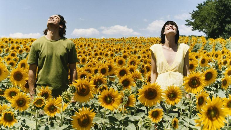 why-do-sunflowers-face-the-sun_5084e7dc-da1e-4d35-b765-1a310661970c